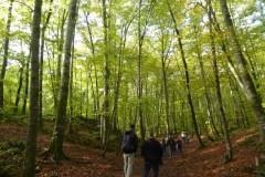 Natura i medi ambient - Jordi Sacasas