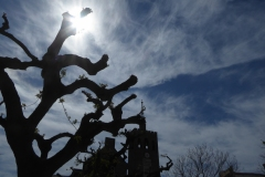 Núvols cirrus 3  - Jordi Sacasas