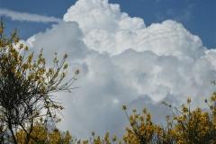 Núvols 78 - Jordi Sacasas